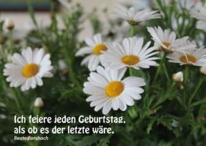 Leben_ist_Mee(h)r_2016_Postkarten38
